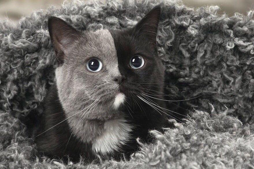 Редкий котенок, рожденный с «двумя лицами», превратился в самого красивого кота